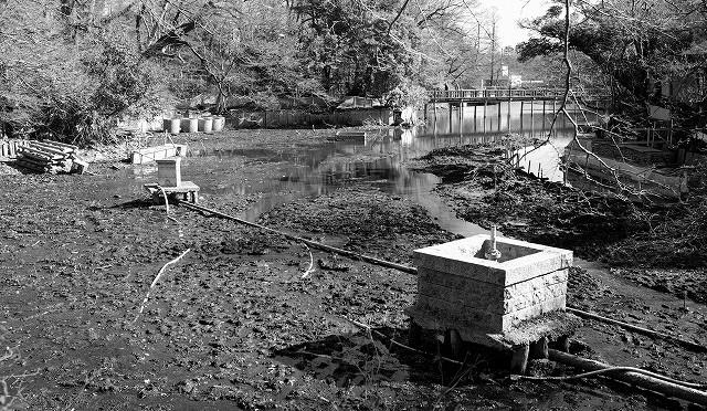 富士フイルム X-T10 : 井の頭公園のかいぼり風景をモノクロで (2/3)
