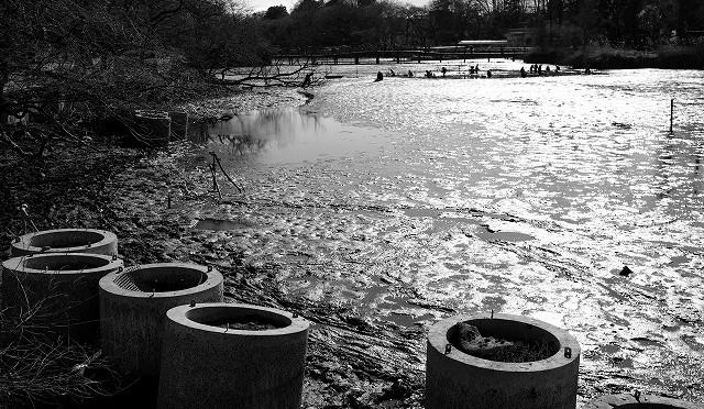 富士フイルム X-T10 : 井の頭公園のかいぼり風景をモノクロで (1/3)