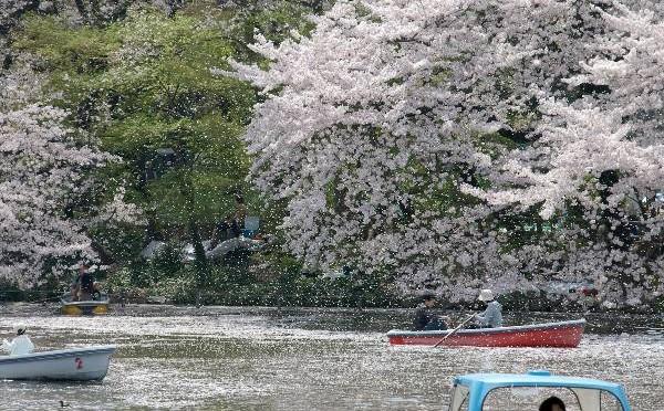 吉祥寺たいむましーん NO.6・・・2005年4月編 桜吹雪の井の頭公園