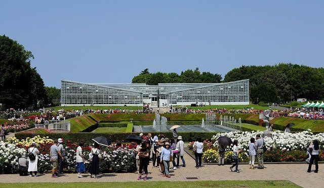 富士フイルムX-T10/XF 35㎜ F2で神代植物公園・春のバラフェスタを撮る (1/2)