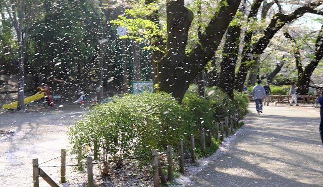 4月15日 桜吹雪の吉祥寺・井の頭公園
