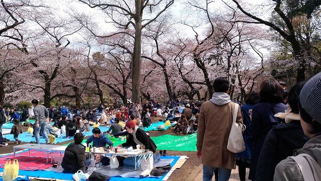 吉祥寺・井の頭公園の桜見物