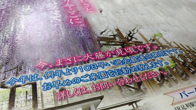 休日ぶらり一人旅  亀戸天神・藤まつりから上野公園・東京舞祭へ